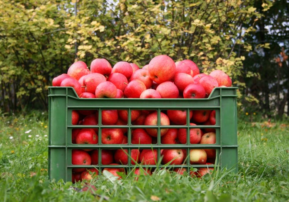 Македония: цена на яблоко в 2 раза выше, чем в прошлом году ...