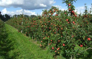 Молодые фермеры — в Молдове работать очень сложно