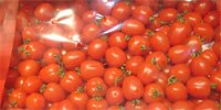 Export of domestic tomatoes