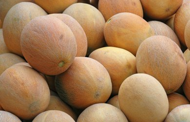 Spain: First melons on the market