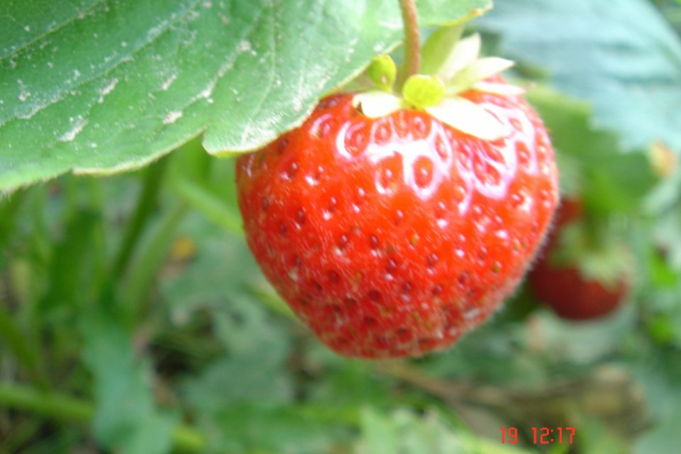 Preliminary list of participants of Berries of Ukraine-2014: Frozen Produce & Fresh Market