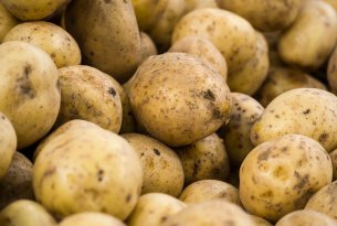 Potatoes - one of the worst seasons on record in Poland