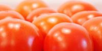 Zagubiony smak pomidorów