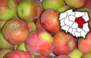 Jakie ceny jabłek?