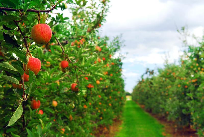 Развитие садоводства –приоритет Тамбовской области