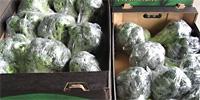 Porównanie cen brokułów krajowych i importowanych